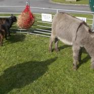 Ark Farm Visit